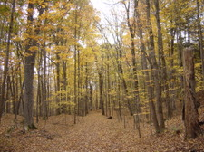 Forest_trail_yellow